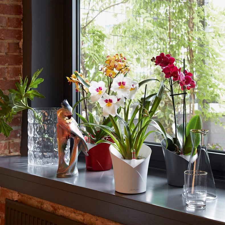 Lechuza Orchidea Range - Summer Garden