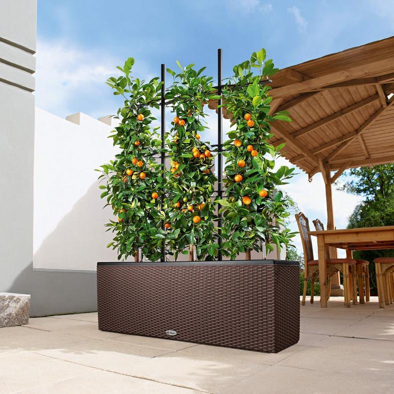 Lechuza Trio Cottage Range - Summer Garden